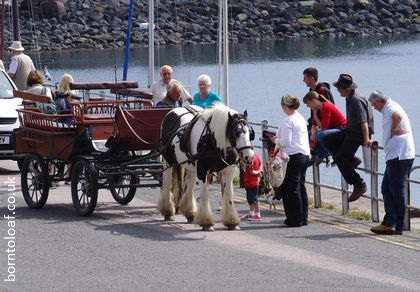 horse carriage ride by sea harbour